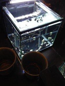 bel aquarium qui nous tend le bras